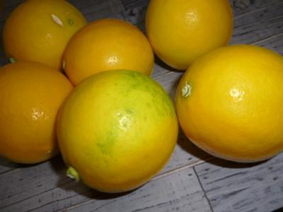 頂いたレモン